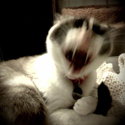 demon-kitten