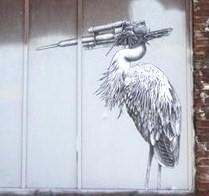 jesse hazelip bird