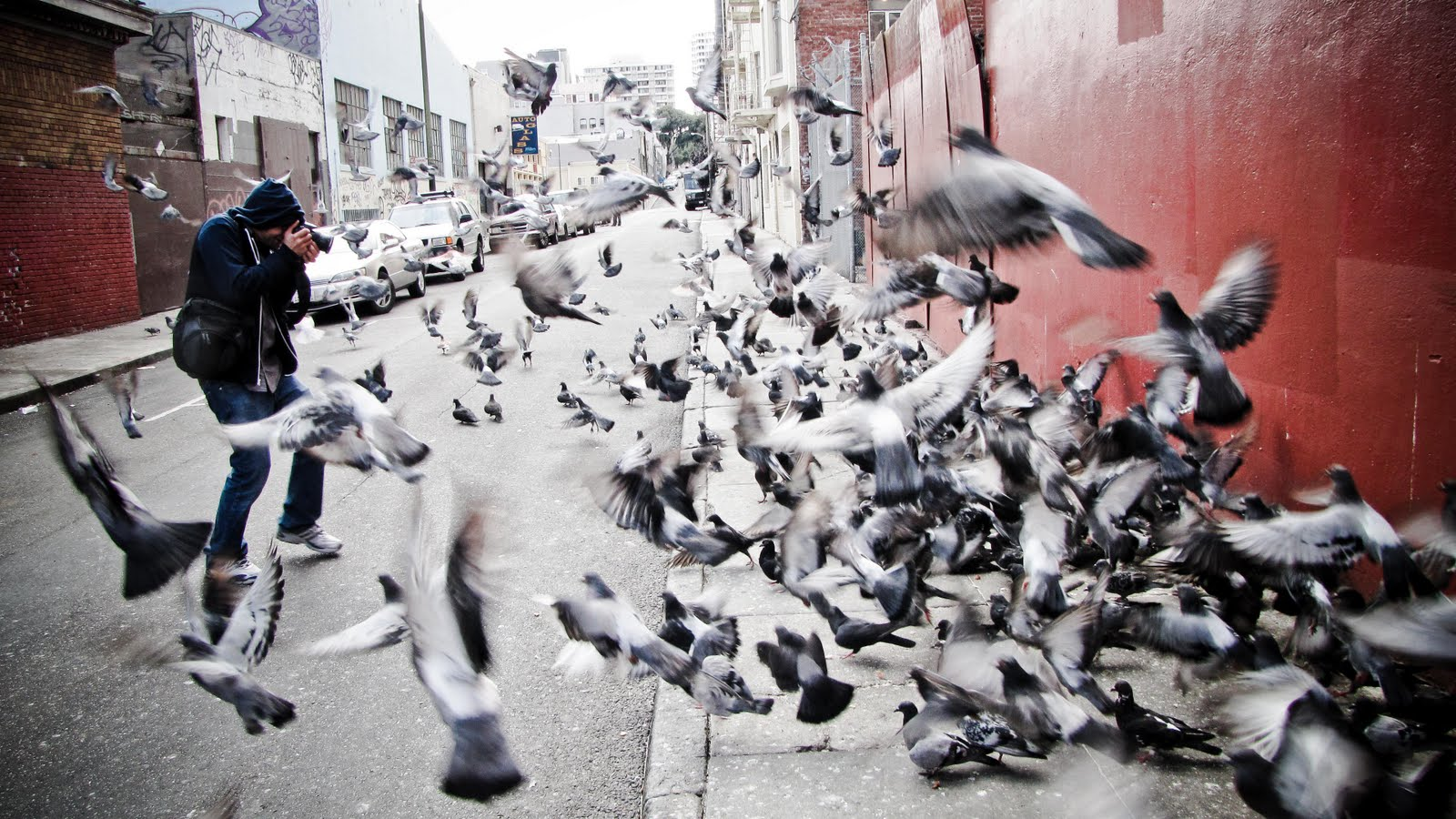 plug1_attacked_by_pigeons