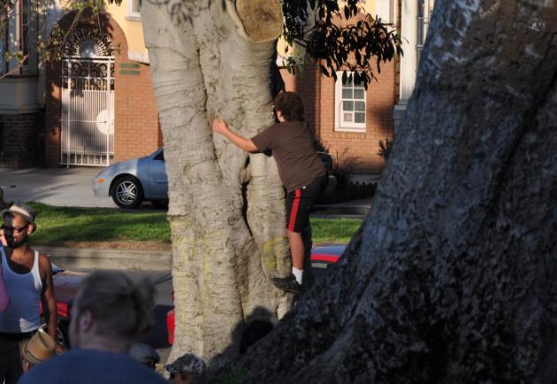 bad santa climbing a tree