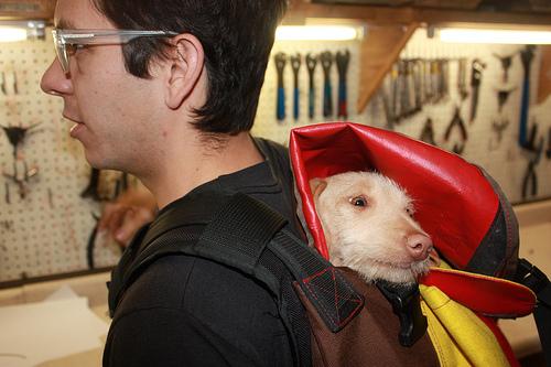 dog_messenger_bag