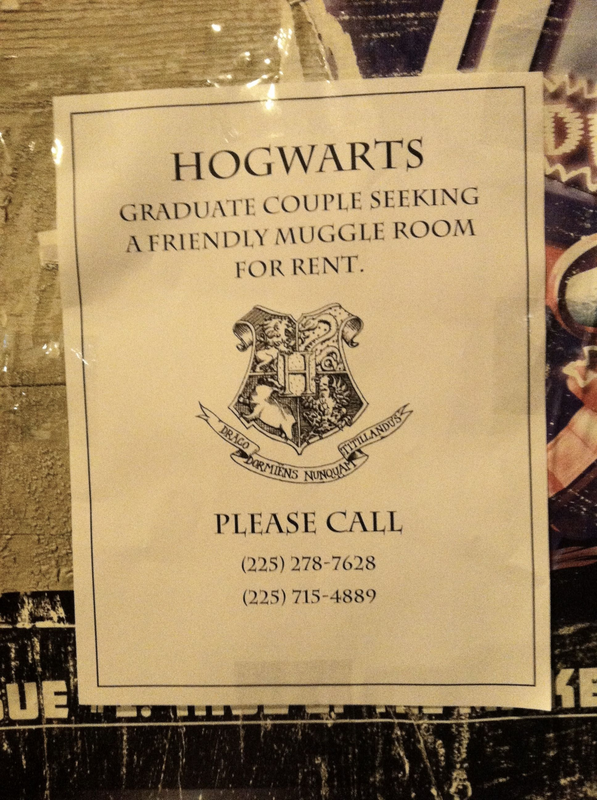 Harry Potter and Spongebob Squarepants want to live with ...